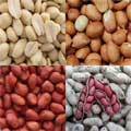 Peanut Types and Production